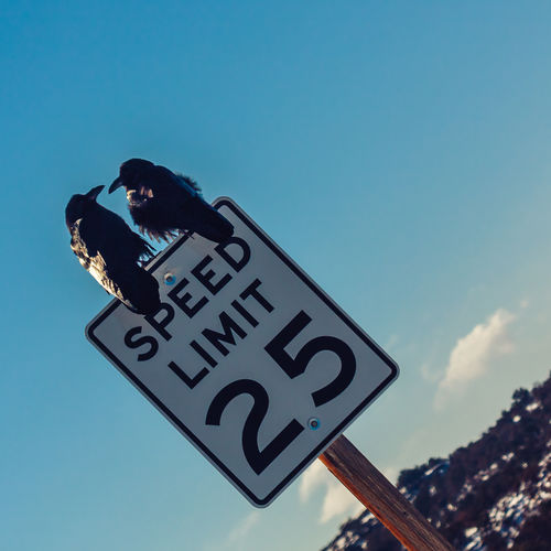 Raven Perching On Speed Limit Sign Against Sky