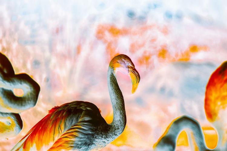 Inverted flamingos