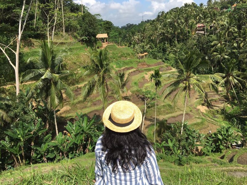 Nature painting from bali Summertime Green Ricefields Bali Ubud Indonesian View