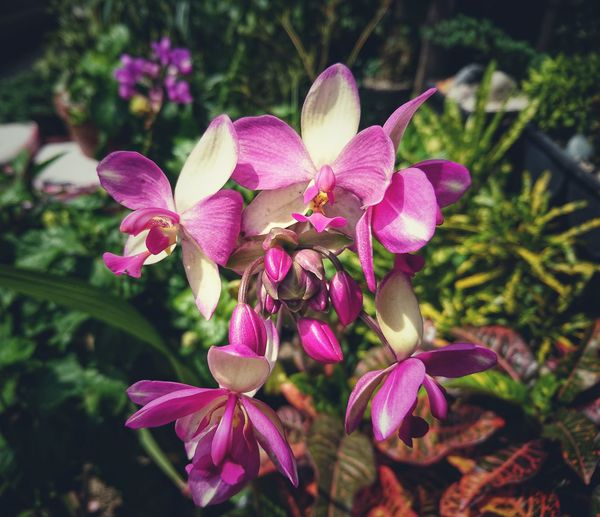 EyeEm Best Shots Eyeem Philippines Nature Flowers,Plants & Garden EyeEm Best Shots EyeEm Nature Lover Flower Flower Head Pink Color Orchid Close-up Plant Botanical Garden Blooming In Bloom Plant Life Botany