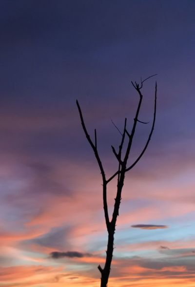 Tree Sunset Blue Sky Close-up Plant Arid Landscape Dramatic Sky