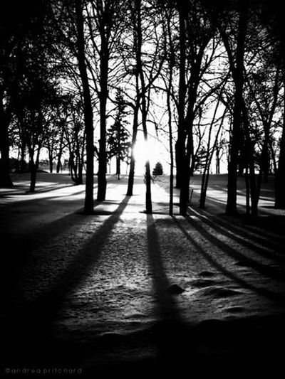 """""""Knowledge is love and light and vision."""" AMPt_community Montréal Black And White"""