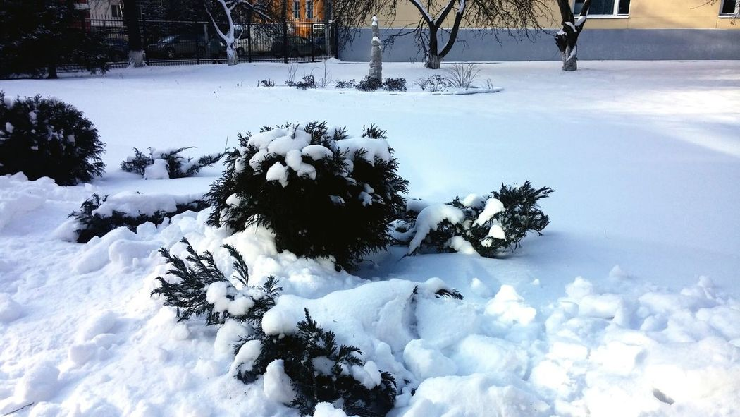 In my university with snows.