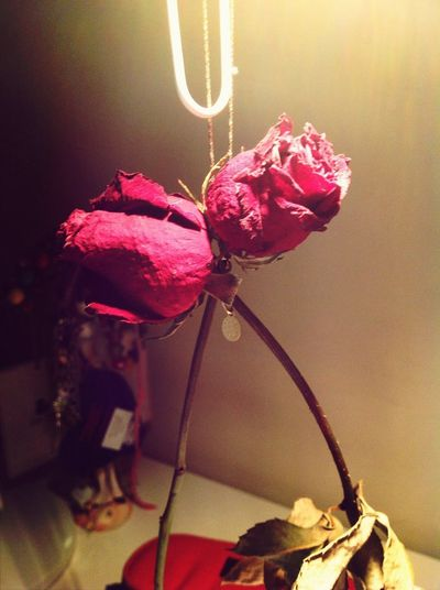 Redrose  Flowers Presents Enjoying Life
