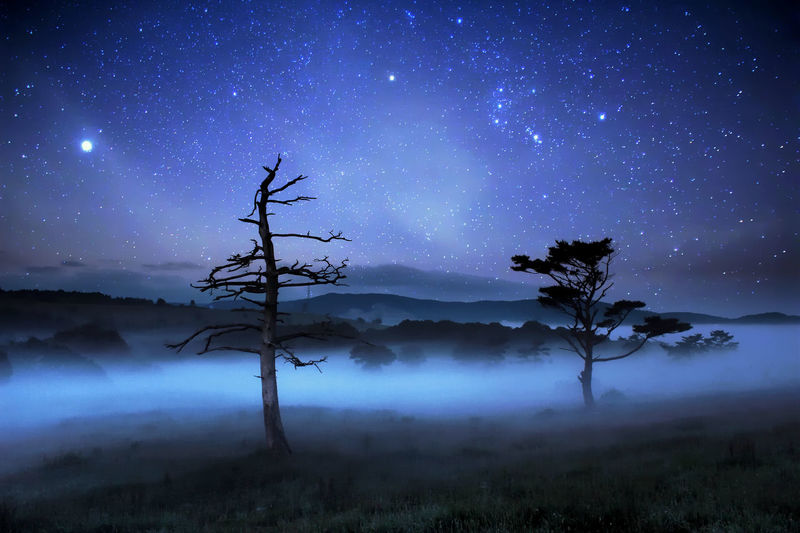 Silhouette trees on field against starry sky