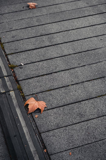 Alone leaf High Angle View Day Leaf Orange Color Paving Stone Leaves Gray Brown Textured  Diagonal Lines Single Object Autumn Outdoors