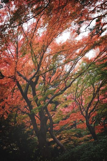 🍂 Autumn. Autumn colors Autumn Tokyo Tokyo,Japan Tree Plant Beauty In Nature Growth Branch Nature No People Tranquility Low Angle View Autumn Forest Land Day Backgrounds Plant Part Tree Trunk