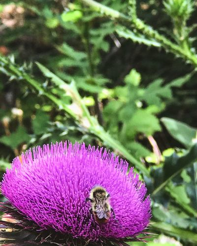 Scenics Flower Nature Purple Bee Plant Growth Outdoors Close-up