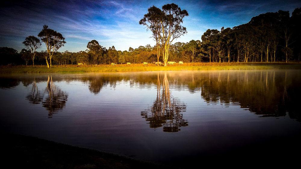 Lake Macquarie Nature Photography Reflection Tree Lake Water No People Nature Sky