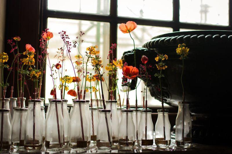 Flowers in bottles by window