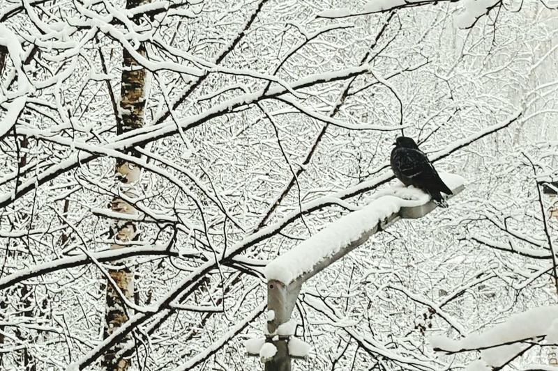 Winter Snow Snow ❄ Pigeon Dove Tree Trees Outdoors Nature