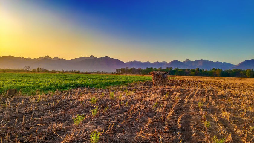 Scenic view of agricultural field against sky at sunset Agriculture Arts Culture And Entertainment Beauty Beauty In Nature Cultures Field Landscape Mountain Nature Night No People Outdoors Rice Paddy Scenics Sky Sunset EyeEmNewHere Flying High