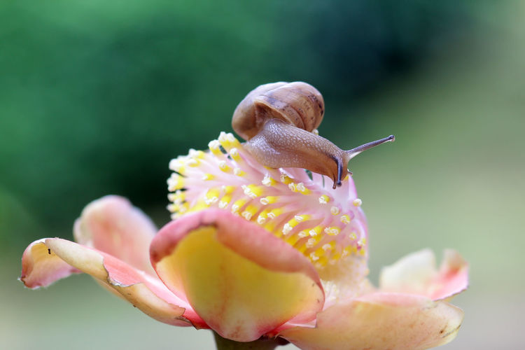 snails, snails over yellow flowers Animal Animal Themes Animals In The Wild Beauty In Nature Close-up Day Flower Flower Head Flowering Plant Focus On Foreground Fragility Freshness Growth Inflorescence Invertebrate Nature No People Outdoors Petal Plant Vulnerability