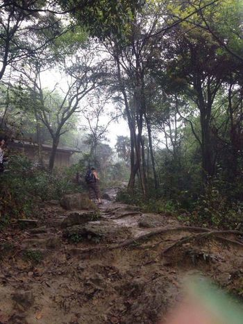 Outdoors Person Walking Forest Nature Mount Emei