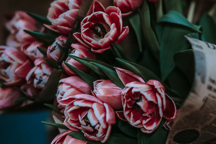 Bouquet of pink spring tulips