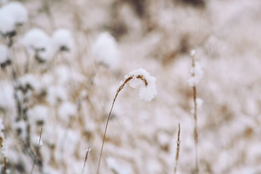 Growth Tranquility Pattern Frost Flower Head Full Frame Flower In Snow Background Backgrounds Patterns In Nature Beauty In Nature Weather Wintertime Cold Temperature Snow Frozen Textured  Snowfall Snow Covered Winter Flower Plant Outdoors White Color Minimalism