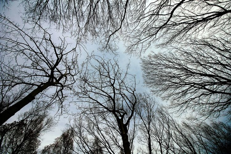 Tree Sky No People Nature Branch Low Angle View Bare Tree Outdoors Park Close-up Day Beauty In Nature Backgrounds