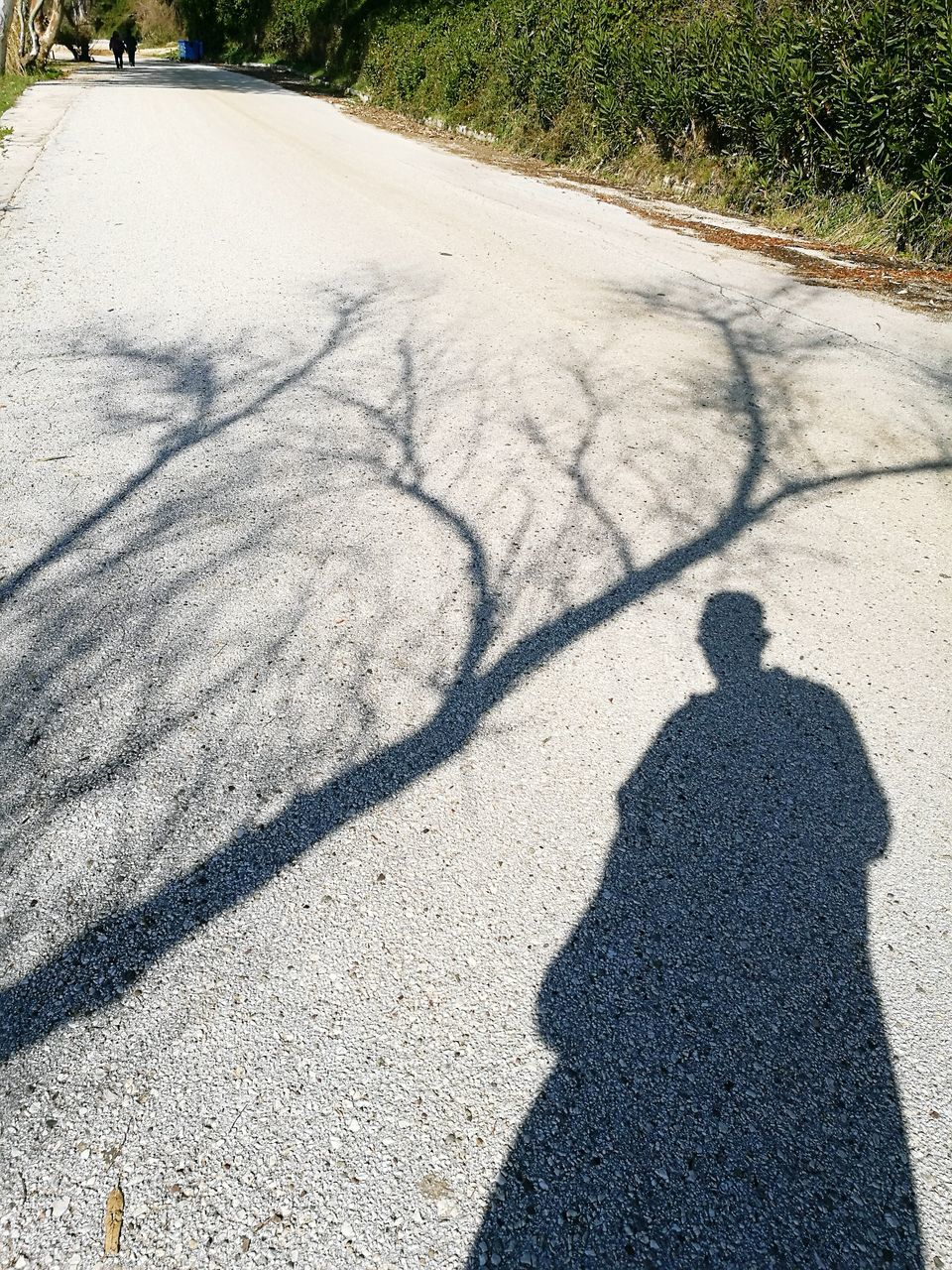 shadow, sunlight, focus on shadow, high angle view, day, outdoors, nature, road, sand, real people, tree, beauty in nature