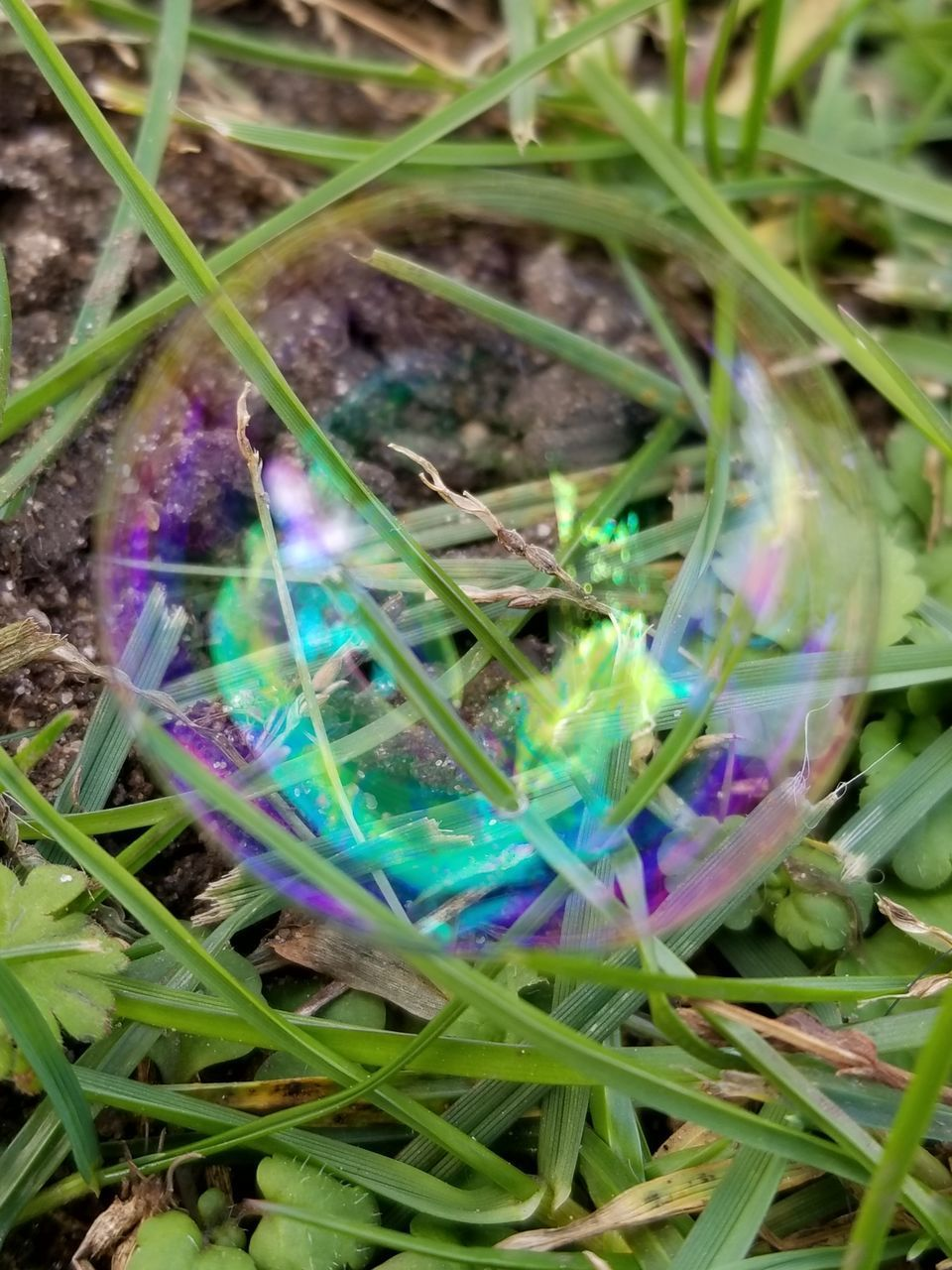 multi colored, vulnerability, fragility, close-up, no people, bubble, plant, nature, day, green color, purple, high angle view, transparent, outdoors, sphere, selective focus, soap sud, shiny, grass, blue, lightweight