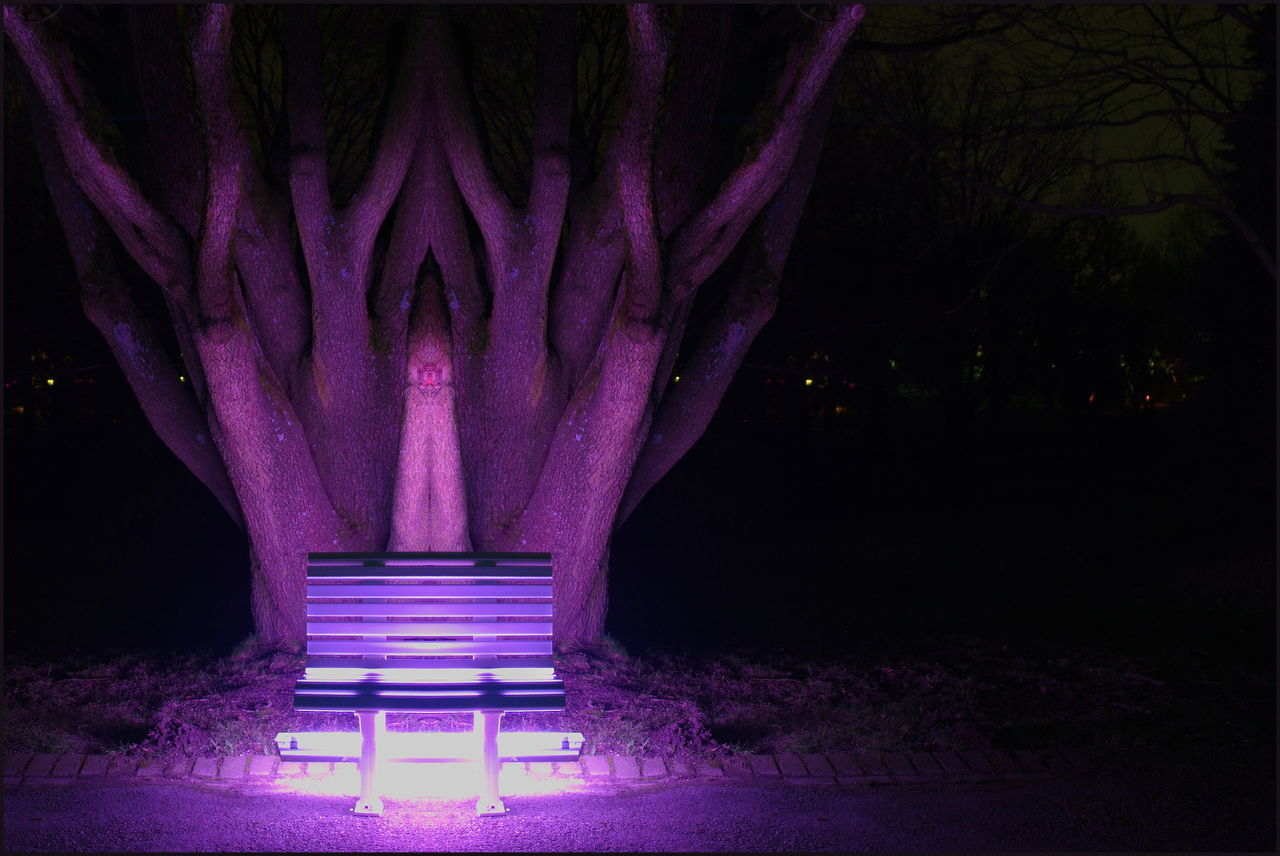 night, illuminated, purple, no people, architecture, light - natural phenomenon, lighting equipment, nature, dark, tree, plant, glowing, outdoors, pink color, built structure, park, light, long exposure, electric light