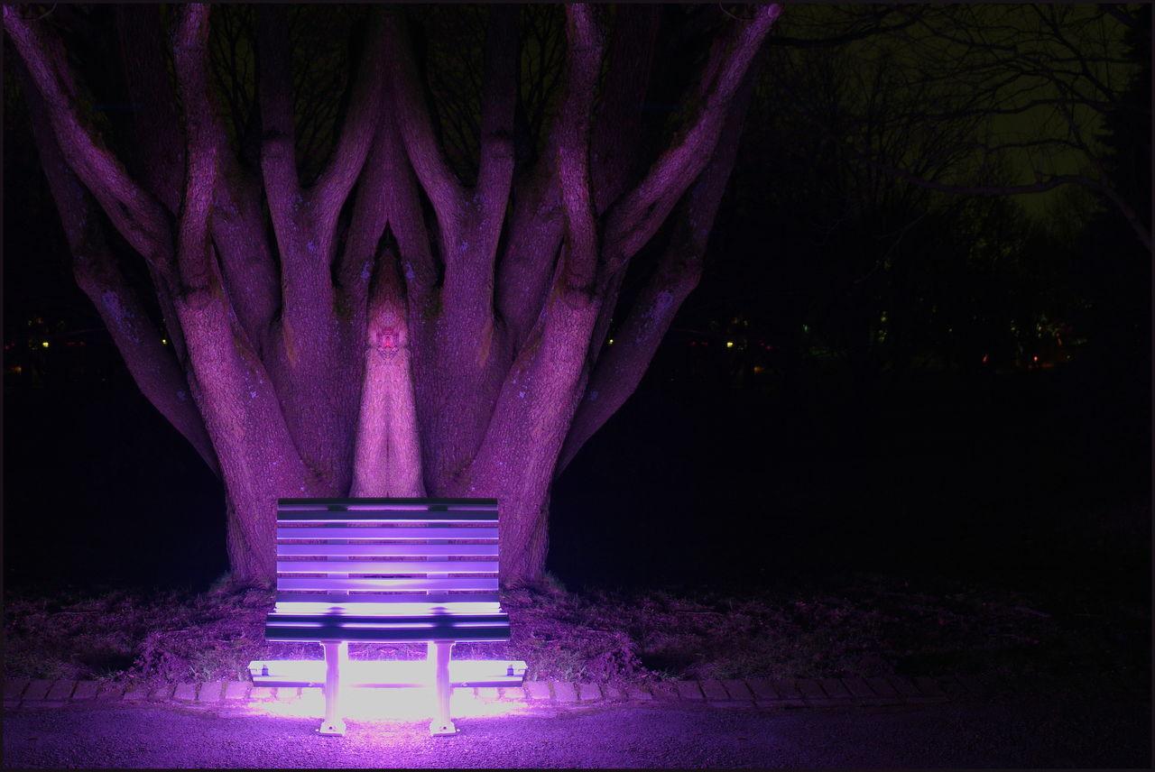 ILLUMINATED PURPLE LIGHTS IN PARK