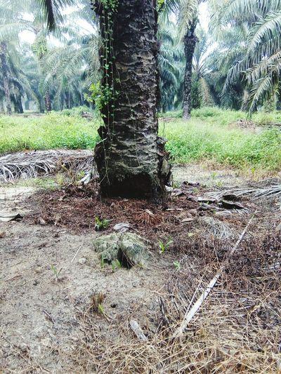 Ganoderma Tree Nature