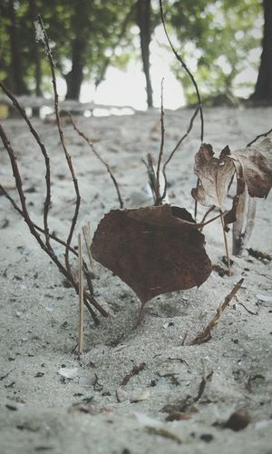 Micro Nature Sprigs Sand Leaves🌿 Litter