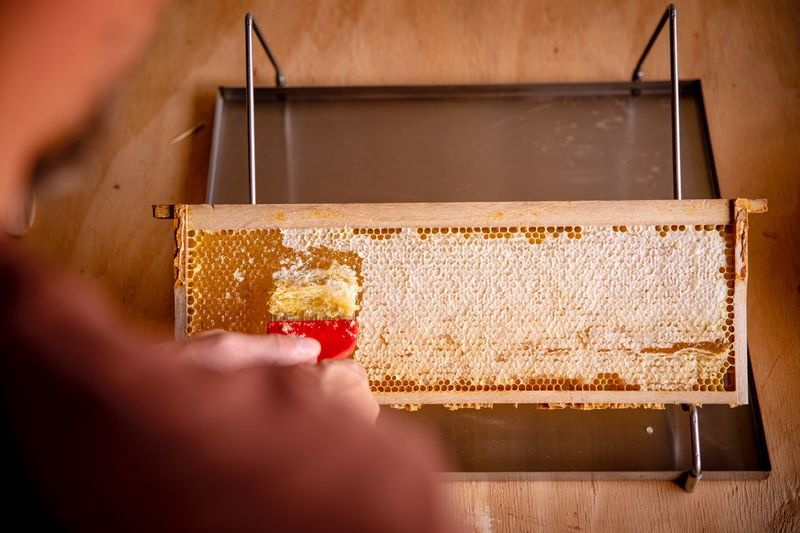 Cropped hand removing honey from beehive