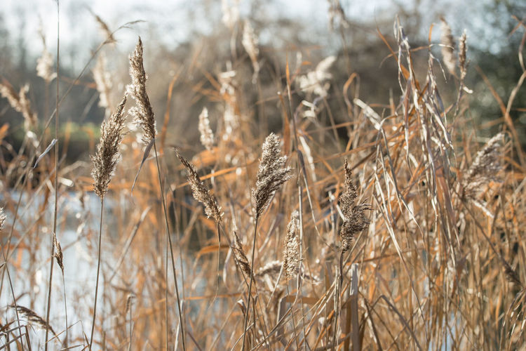 Close-up of plants on field during winter