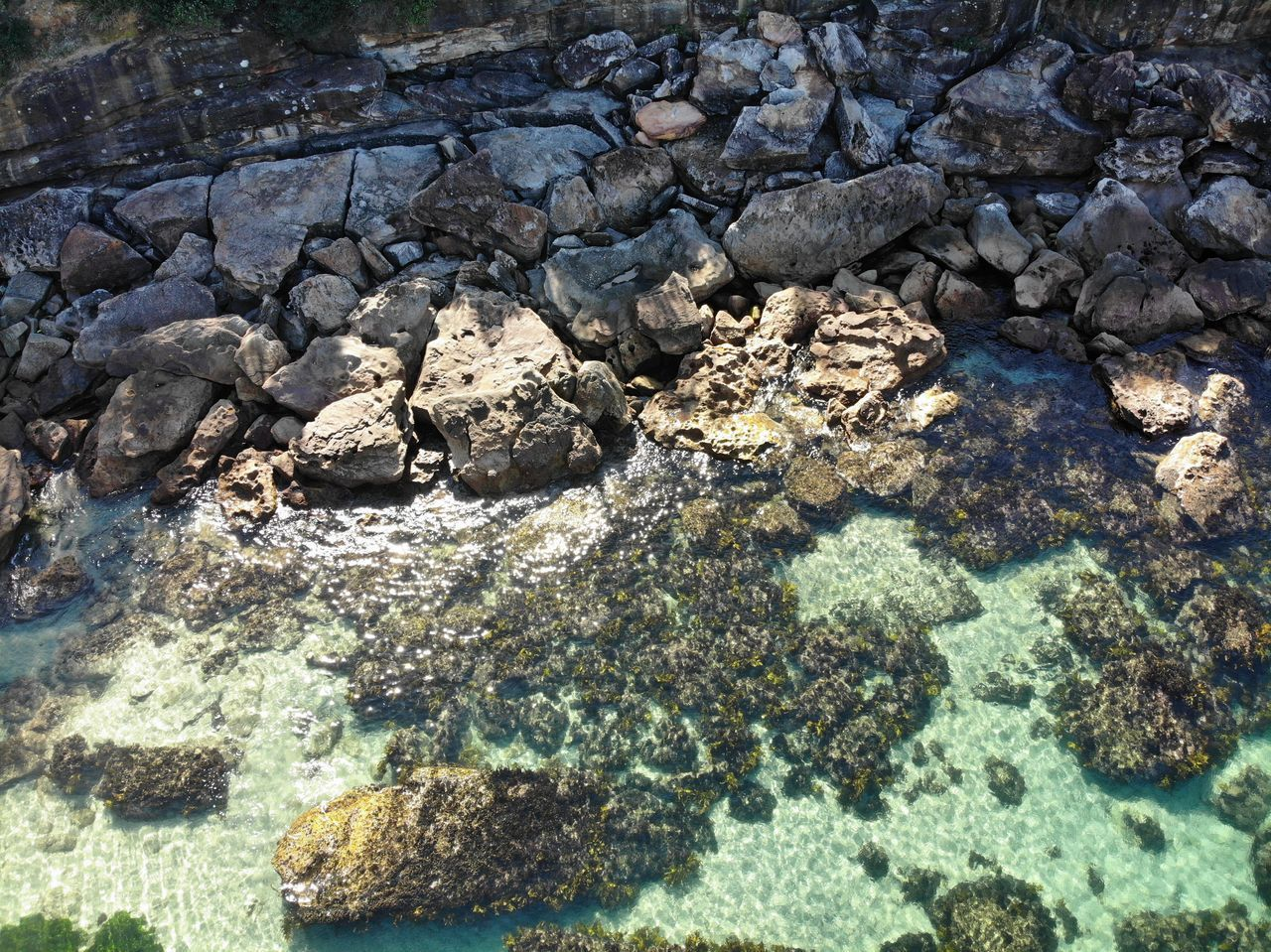 water, rock, solid, rock - object, nature, no people, sea, day, animals in the wild, high angle view, animal, textured, underwater, animal wildlife, animal themes, geology, outdoors, sea life, transparent, marine, purity, shallow