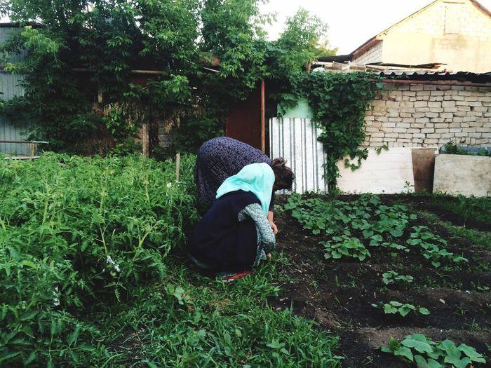 Так прошло моё детство. У бабушки во дворе, копаясь в огороде с моей любимой мамой. Столько времени прошло, а я все ещё с радостью забегаю в этот волшебный для меня двор, чтобы вспомнить все. Самое ценное, самое дорогое.