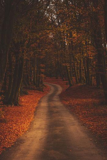 burgandy - France - 2016 ©sebastien.rossi Bourgogne France Autumn Burgandy Footpath Landscape Tree WoodLand