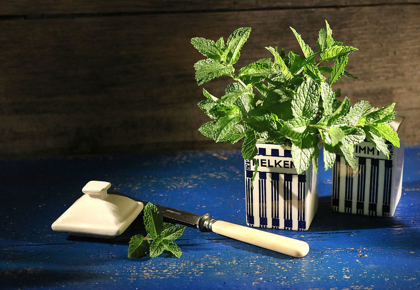 Herb Herbs Vintage Kitvhen Nostalgia Wood Table Plant Country Life Mint
