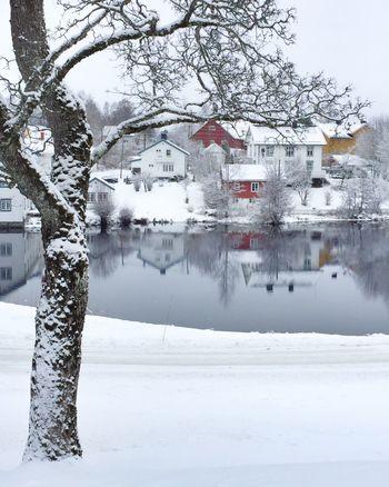 Image of winter Winter Snow Cold Temperature Landscape Winterwonderland Visitnorway Norway Beauty In Nature Tranquil Scene Wintertime