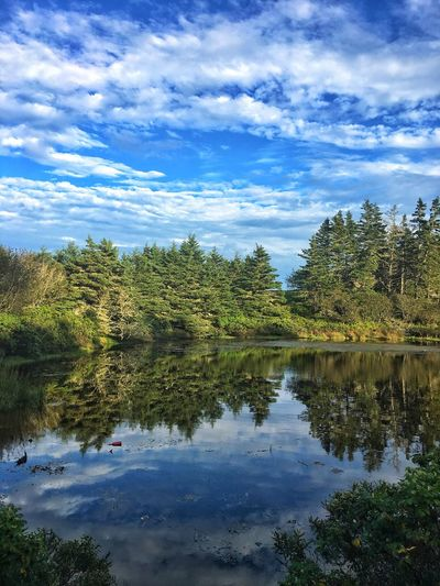 Tree Water Reflection Lake Sky Nature Tranquil Scene Cloud - Sky Beauty In Nature Tranquility Scenics No People Outdoors Growth Day Forest