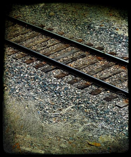 Backgrounds Close-up Danger Day Elevated View Full Frame Nature No People Railroad Track Skeletons Weather Wyoming
