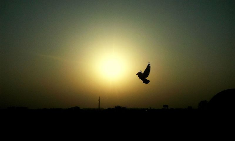 sunset😊❤ Freedom Freedom Of Life Naturelovers Evenningtime Birdflying Nature_collection Nature Photography Beauty In Nature EyeEm Best Shots EyeEm Nature Lover Eyyem Photography EyeEmNewHere Tea Time EyeEm Selects EyeEm Gallery Flying Sunset Silhouette Mid-air Bird Sky Summer Exploratorium Visual Creativity Summer Exploratorium