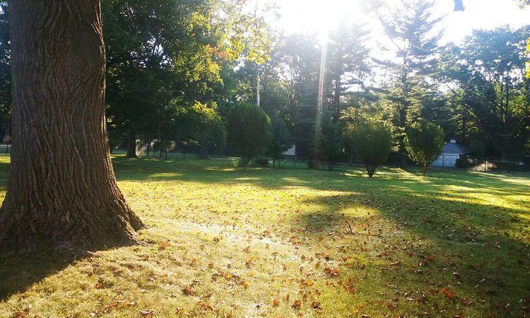 Tree Sunlight Greenery Ourdoors Nj Artlovelaughter Trishann