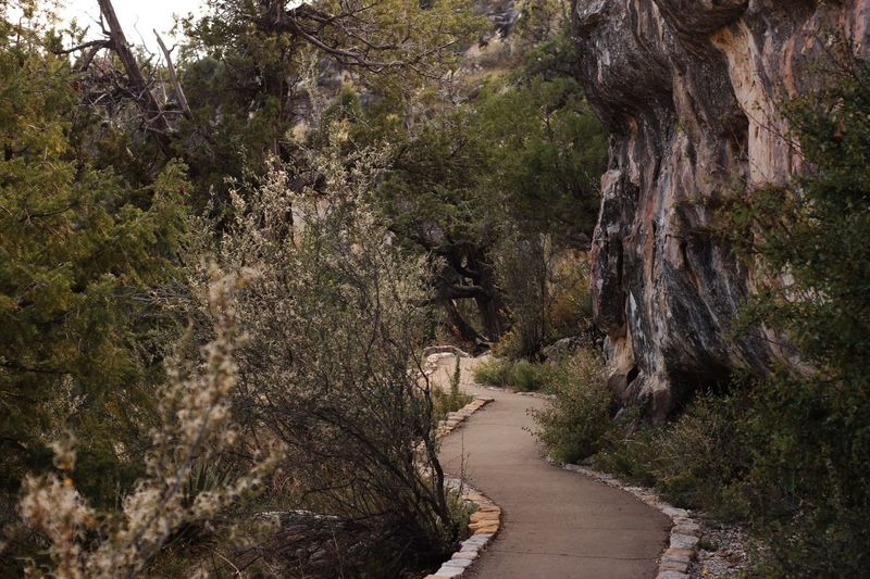 Footpath in walnut canyon National Park Plant Tree Growth Nature Day Beauty In Nature Direction Tranquility The Way Forward No People Green Color Land Road Transportation Forest Outdoors Footpath Branch Non-urban Scene Sunlight