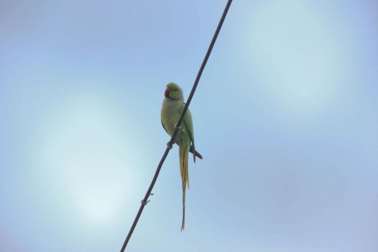 Bird Life Clear