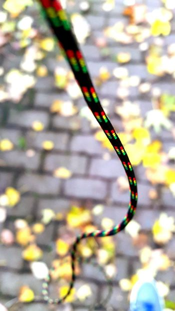 Open Edit Macro_collection Autumm 2015 Chilling ✌ On My Way Leaves