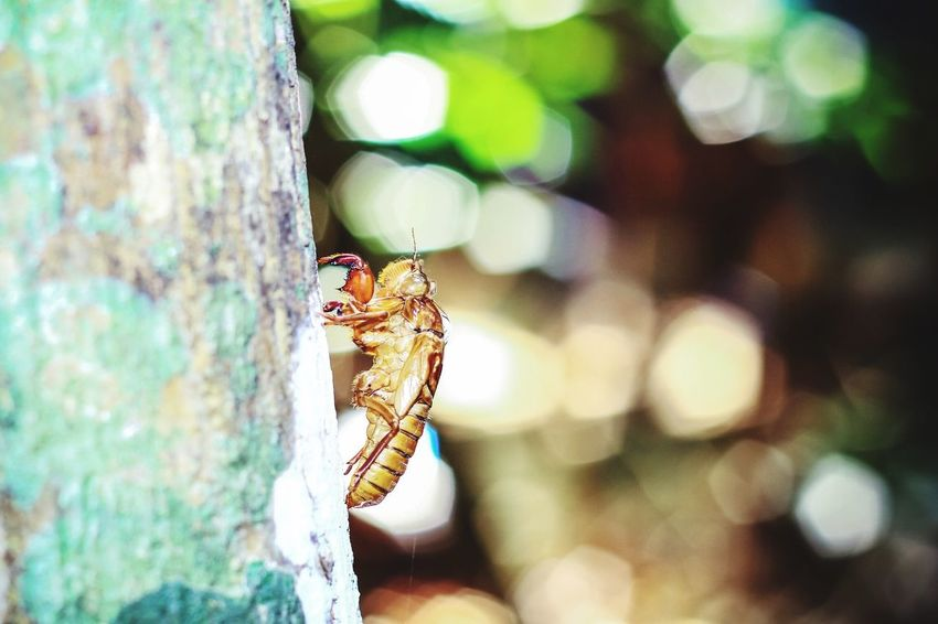 Past just pass...(canon 550D 50 mm) Molt Cicada