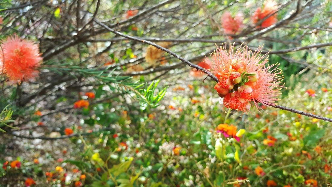 Flower Flower Head Blossom Beauty In Nature Focus On Foreground Vibrant Color Orange Orange Color Blooming Botany Petal Springtime Growth Freshness Fragility Nature Plant In Bloom Flower Photography Floral Flower Collection Tranquility Non-urban Scene Close-up Growth
