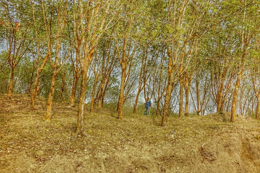 SONY ILCE6000 Photography. Sublime Living Pastel Power Fallen Leaves Conceptual How Do We Build The World Creative The Fall Of Nature Hilly Landscape Learn & Shoot: Balancing Elements Minimalism Minimalobsession Connected To Nature Growing Up Landscape_Collection Trees Collection Me, My Camera And I Hdr_Collection Landscape With Whitewall Creative Photography Trees Collection Jeans Trees And Leaves Srimangal, Moulavibazar, Bangladesh