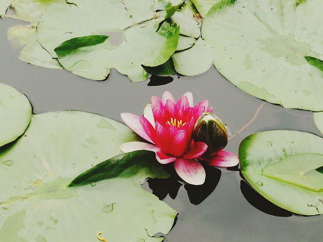 hello world Flower EyeEm Best Shots Flowerlovers Pink Flower EyeEm Flower