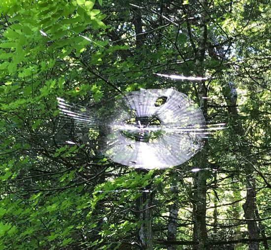 Spiderweb, Sunshine, Woods 1335496