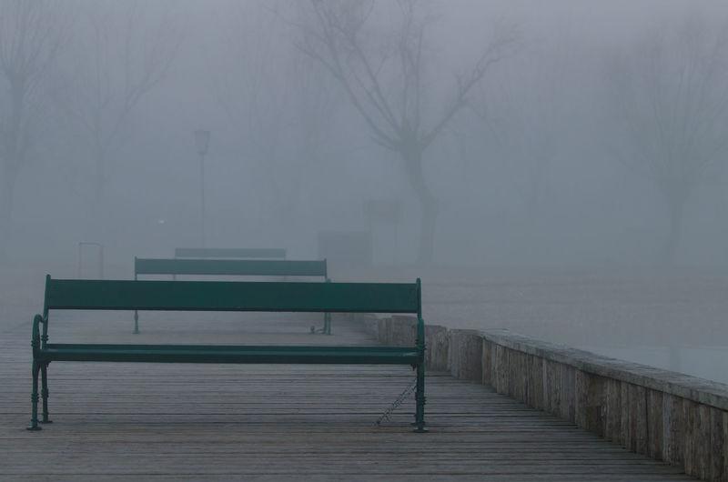Fog Seat Tree