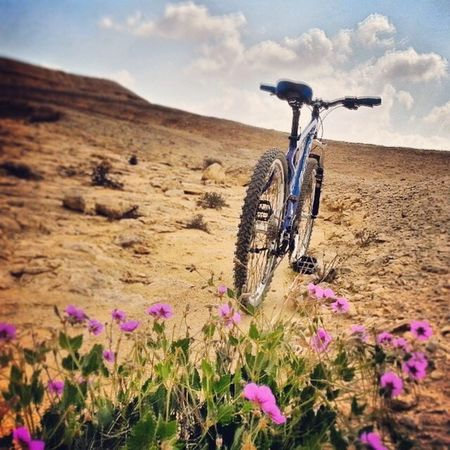 Flower Growth Freshness Beauty In Nature Close-up Nature Plant Fragility Tranquility Bike Mountain Biking MTB Sky Abundance Scenics Outdoors Petal Day No People Focus On Foreground Cloud - Sky Non-urban Scene