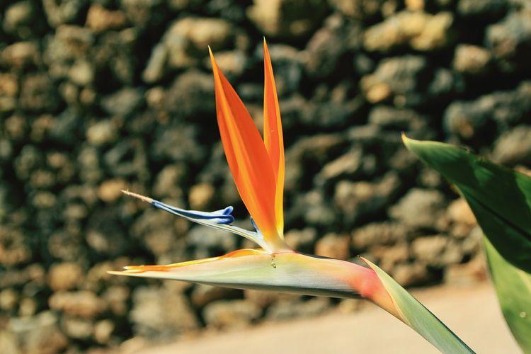 Flower Flowers Day Nature No People Tenerife España Canon_photos Beauty Atlantic Ocean Photo Blooming Flowers Bloom