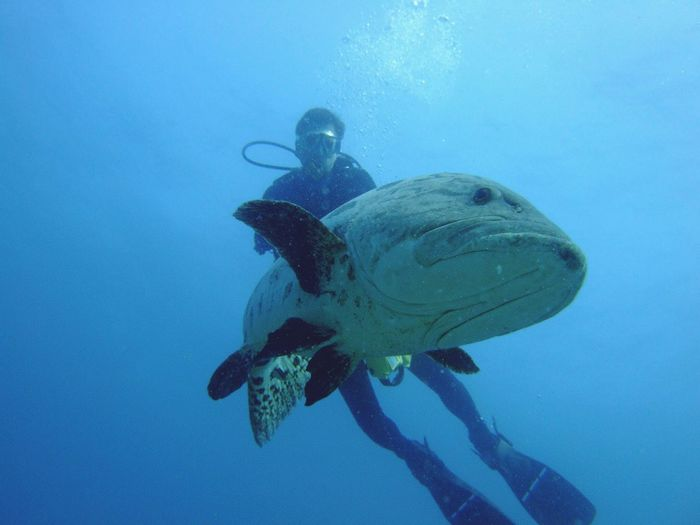 Low angle view of scuba driver by fish in sea